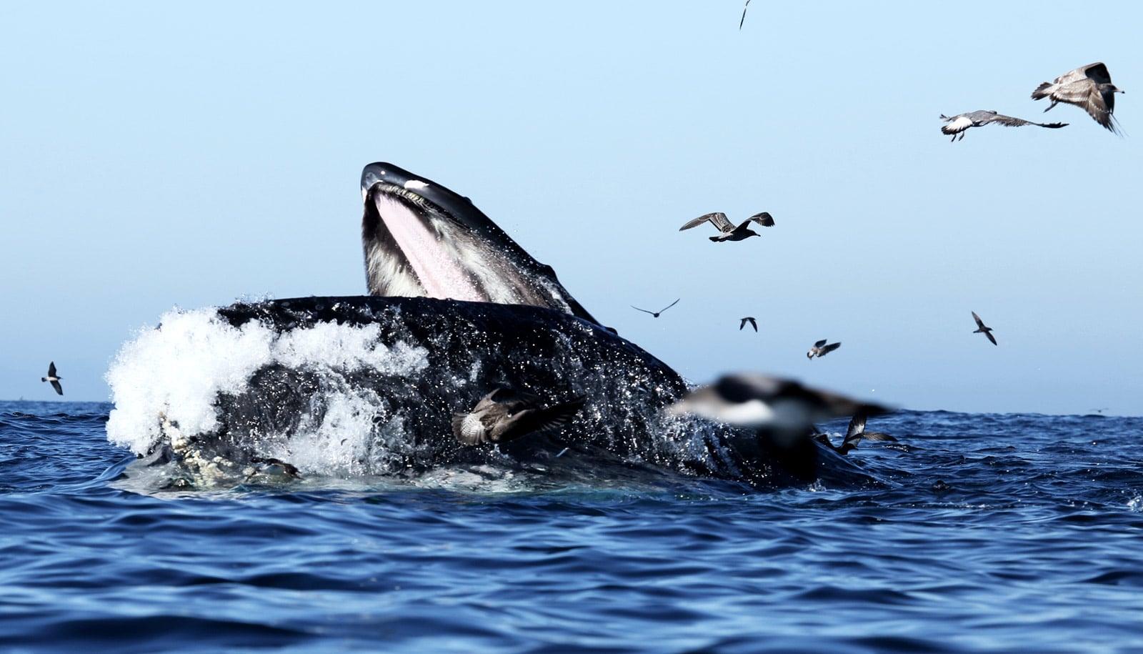качестве решения фото крили которой питается кит особенность утонченная