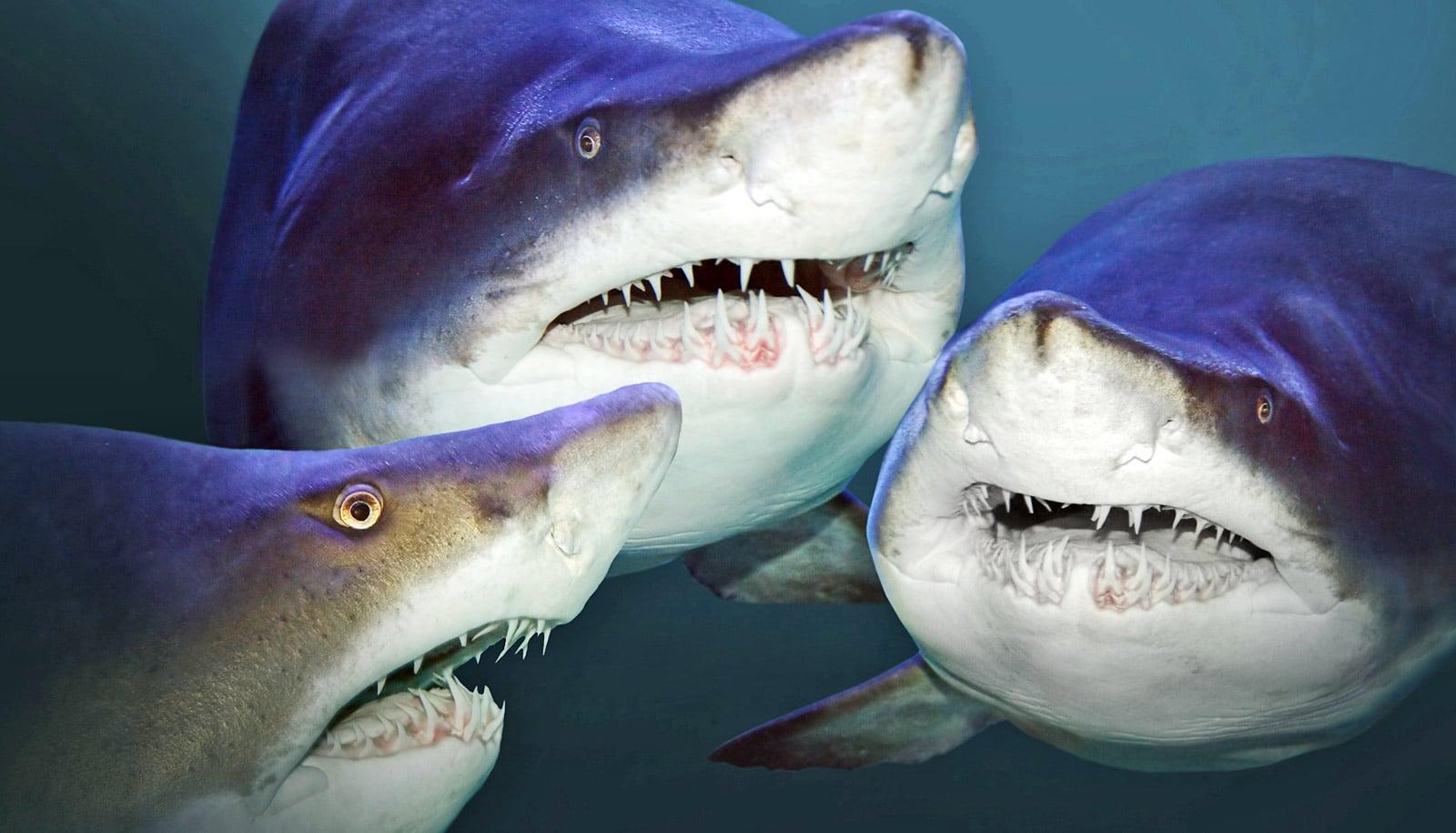 Watch shark teeth on saw blades gnaw fish