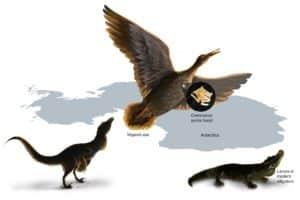 dinosaur sound infographic