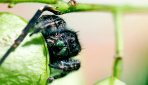 jumping spider on plant