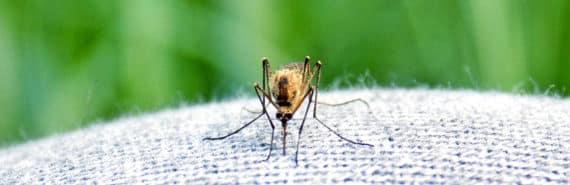 mosquito on knee