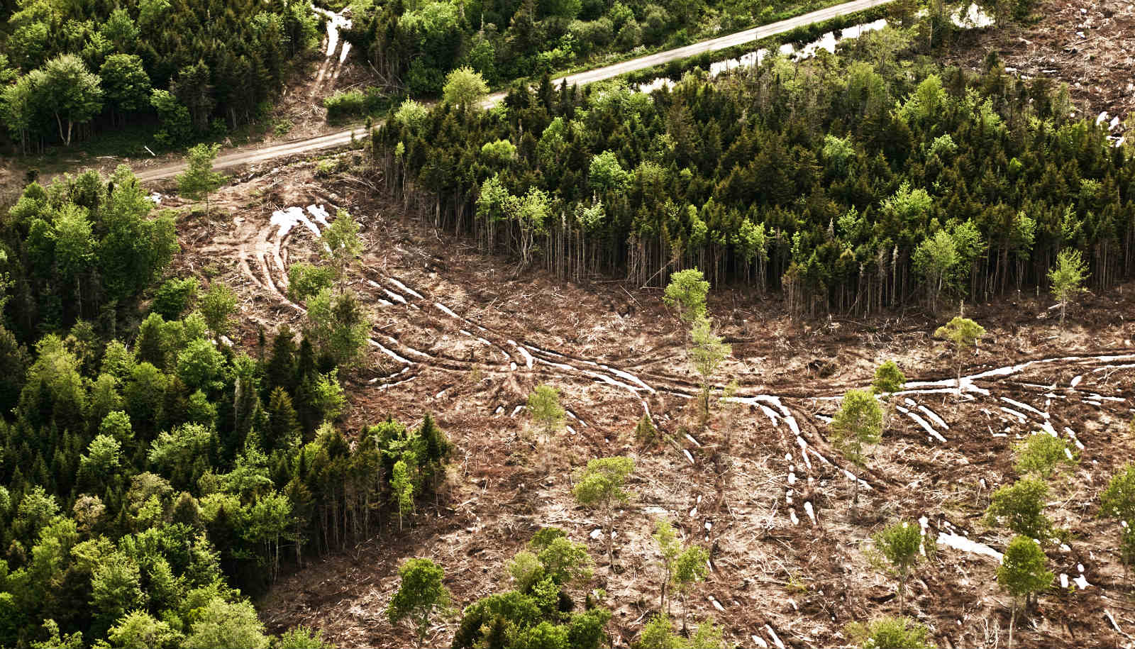 satellite images show a rainforest being deforested futurity