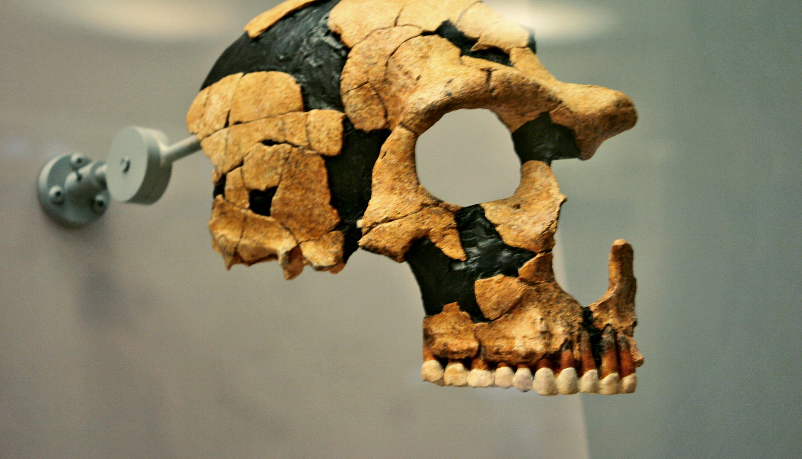 We're losing the Neanderthal bits of our genome