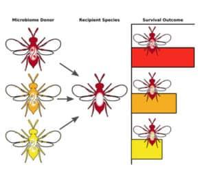 microbiome transplant chart