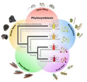 phylosymbiosis illustration