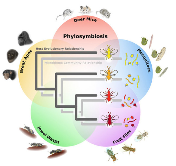 phylosymbiosis illustration