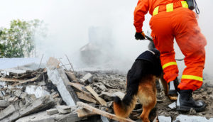 search and rescue dog and person