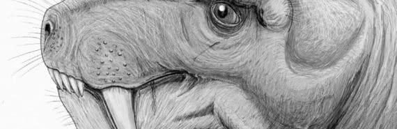 Sketch of a gorgonopsian head