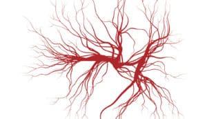 artery illustration