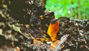 forest soil and leaf