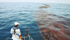 oiled sargassum in the Gulf of Mexico