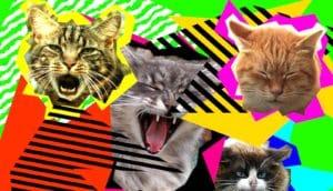 cat internet chaos