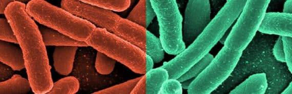 red and green E. coli