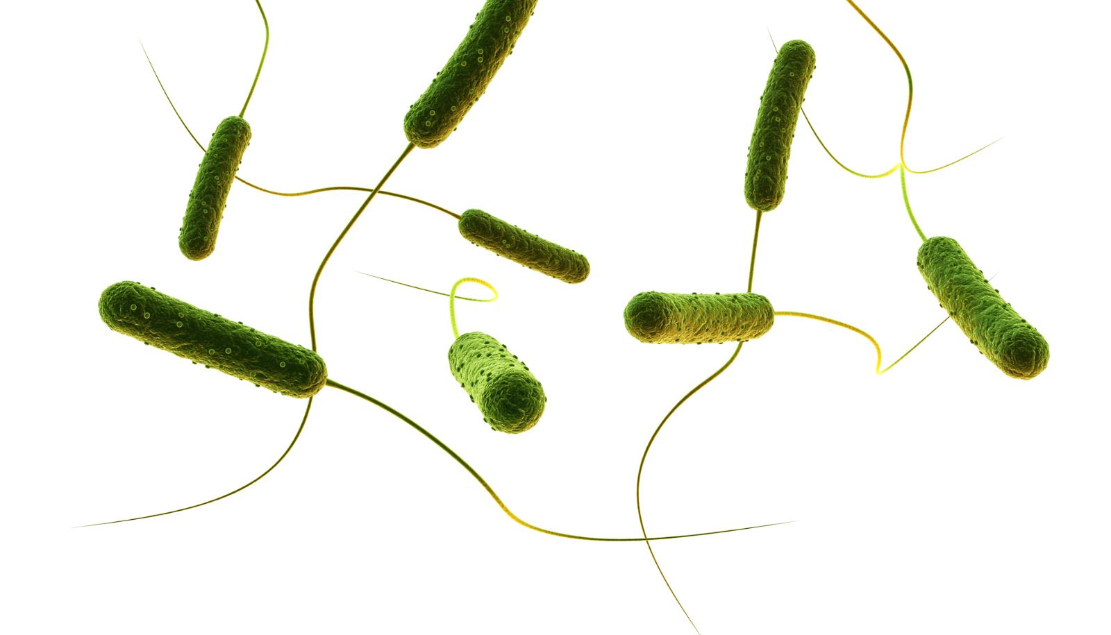 Hungry salmonella hunt and then eat brain tumors