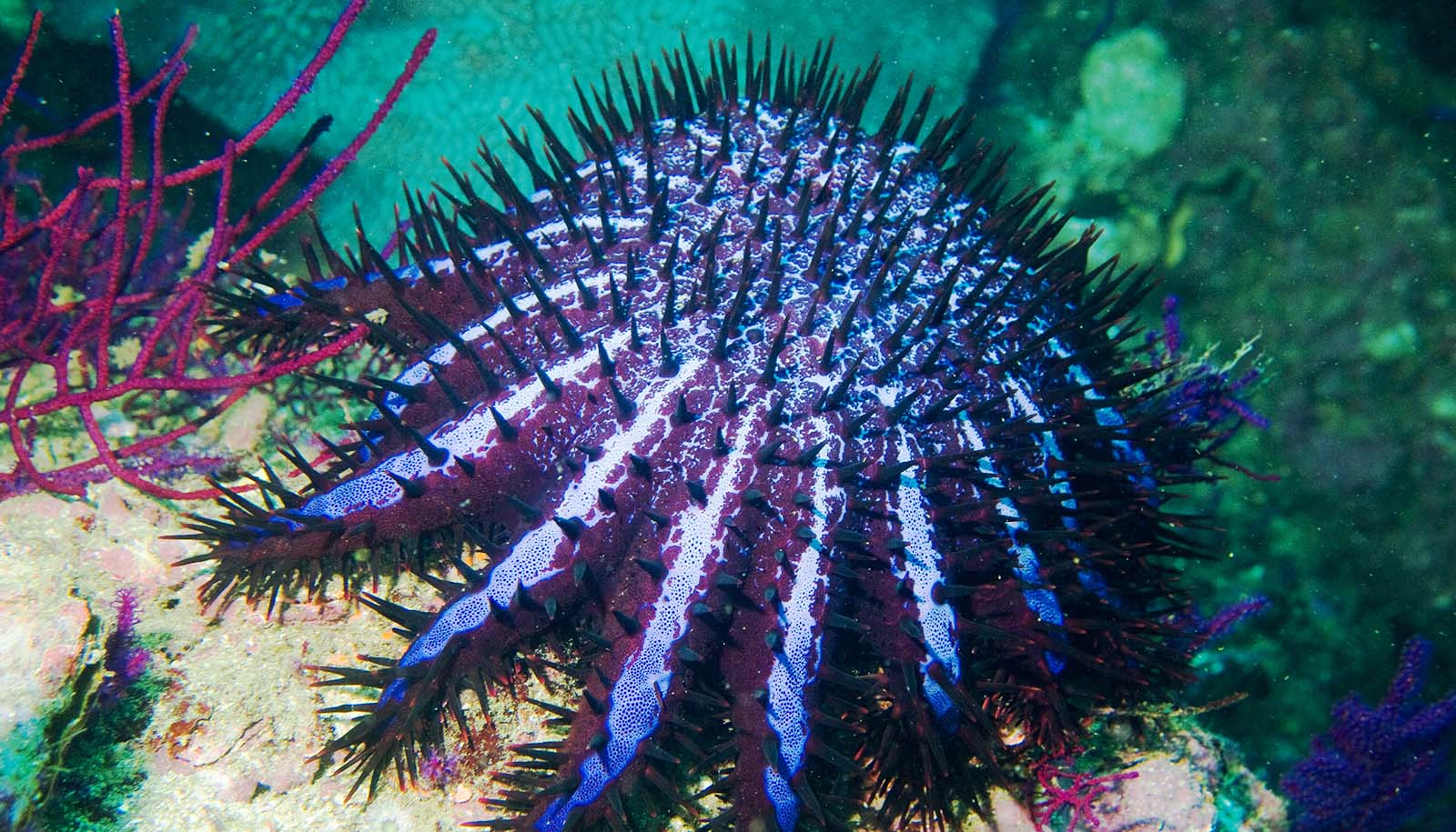 we save coral reefs and then sea stars eat them futurity