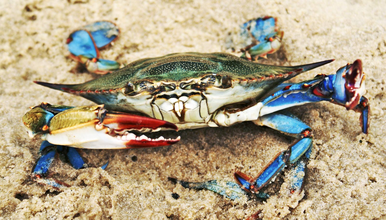 Food web shows winners and losers 7 years after Deepwater