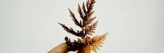 orange leaf in hand
