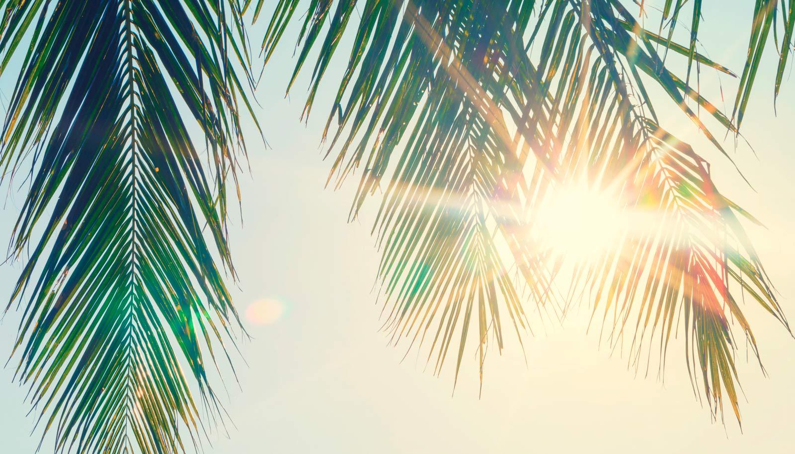 профессиональное фото море солнце ветка пальмы идеальное растение для
