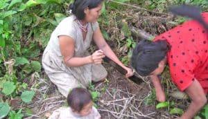 Tsimane women gardening