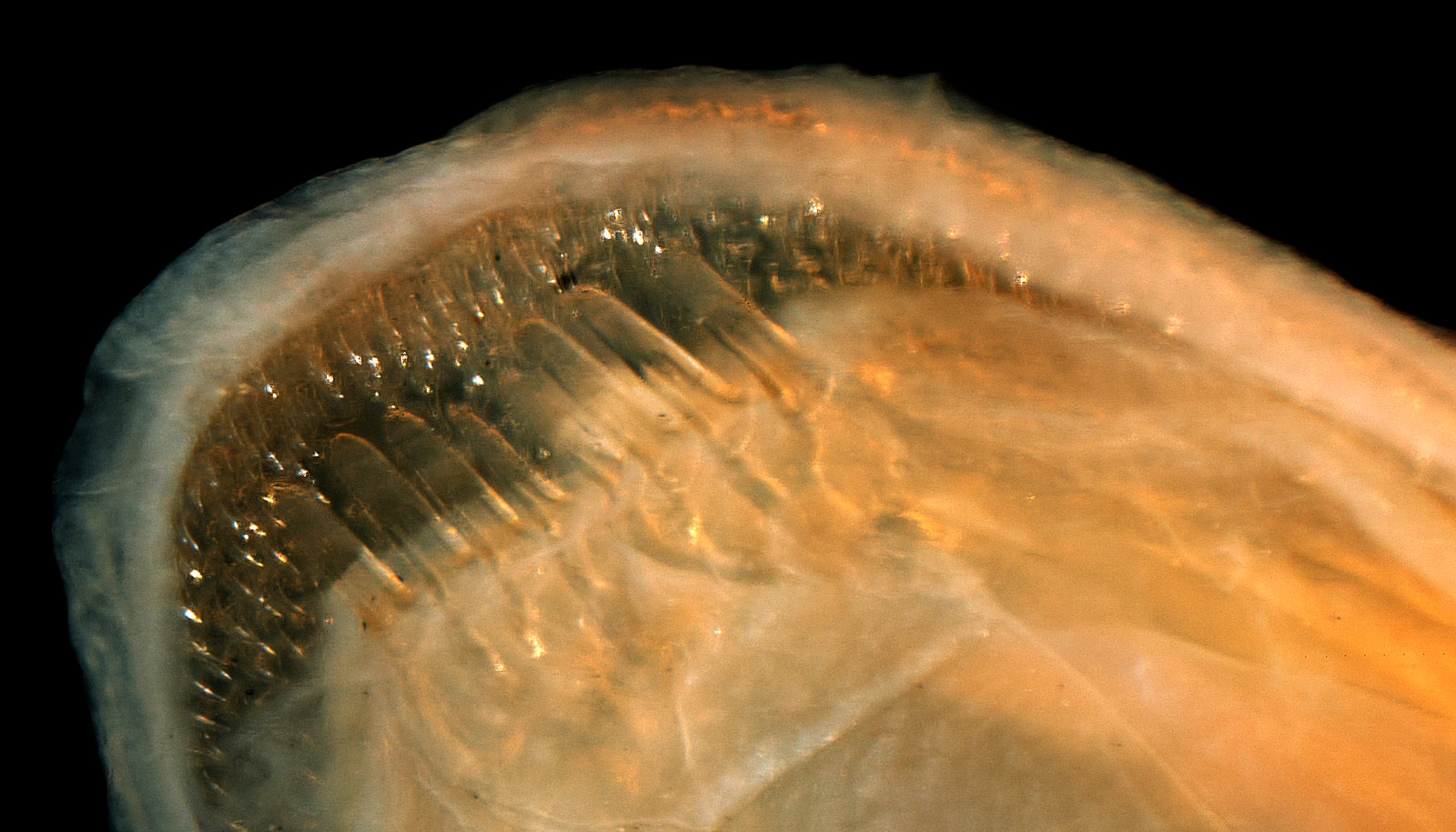 teeth close-up