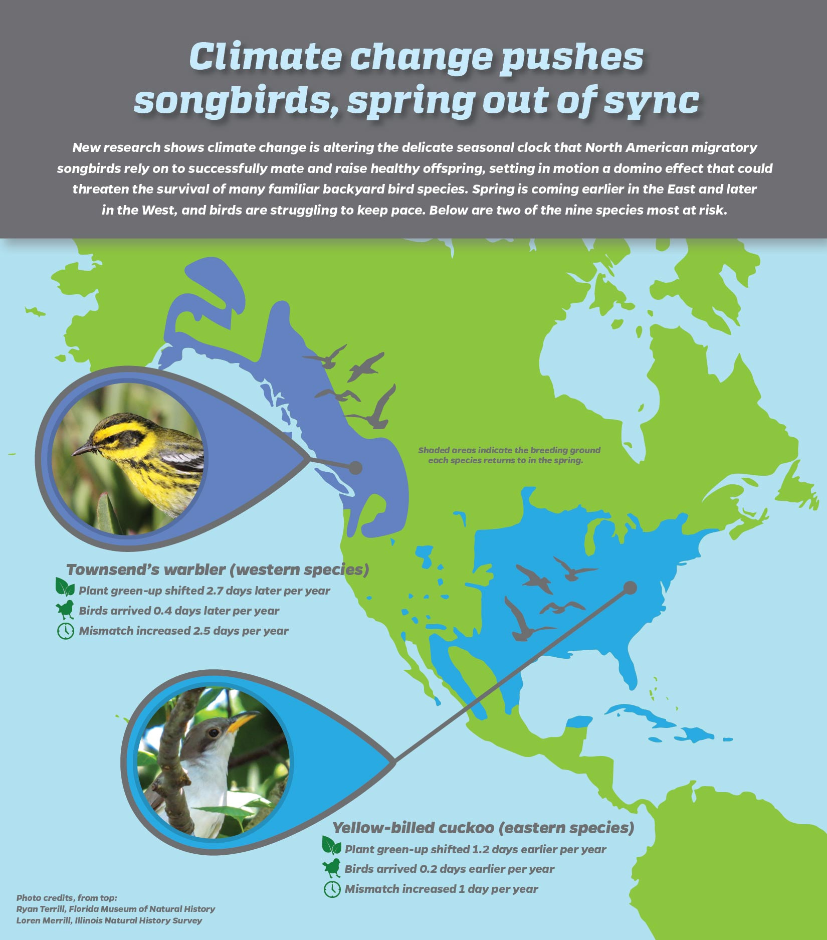 bird and climate infographic