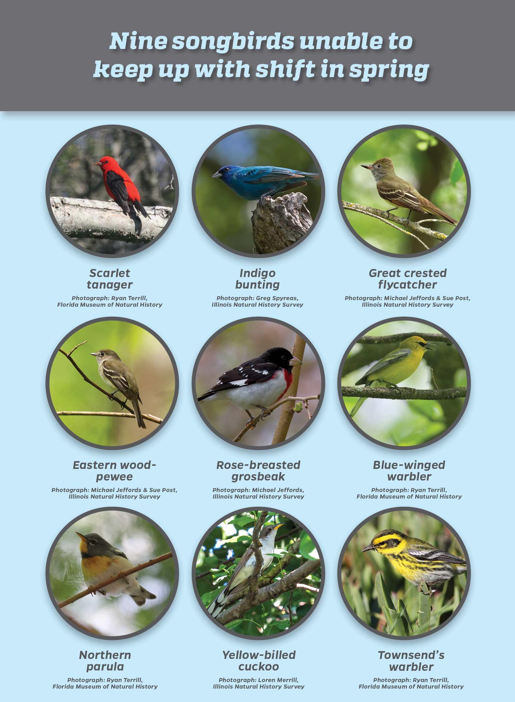 9 songbird species graphic