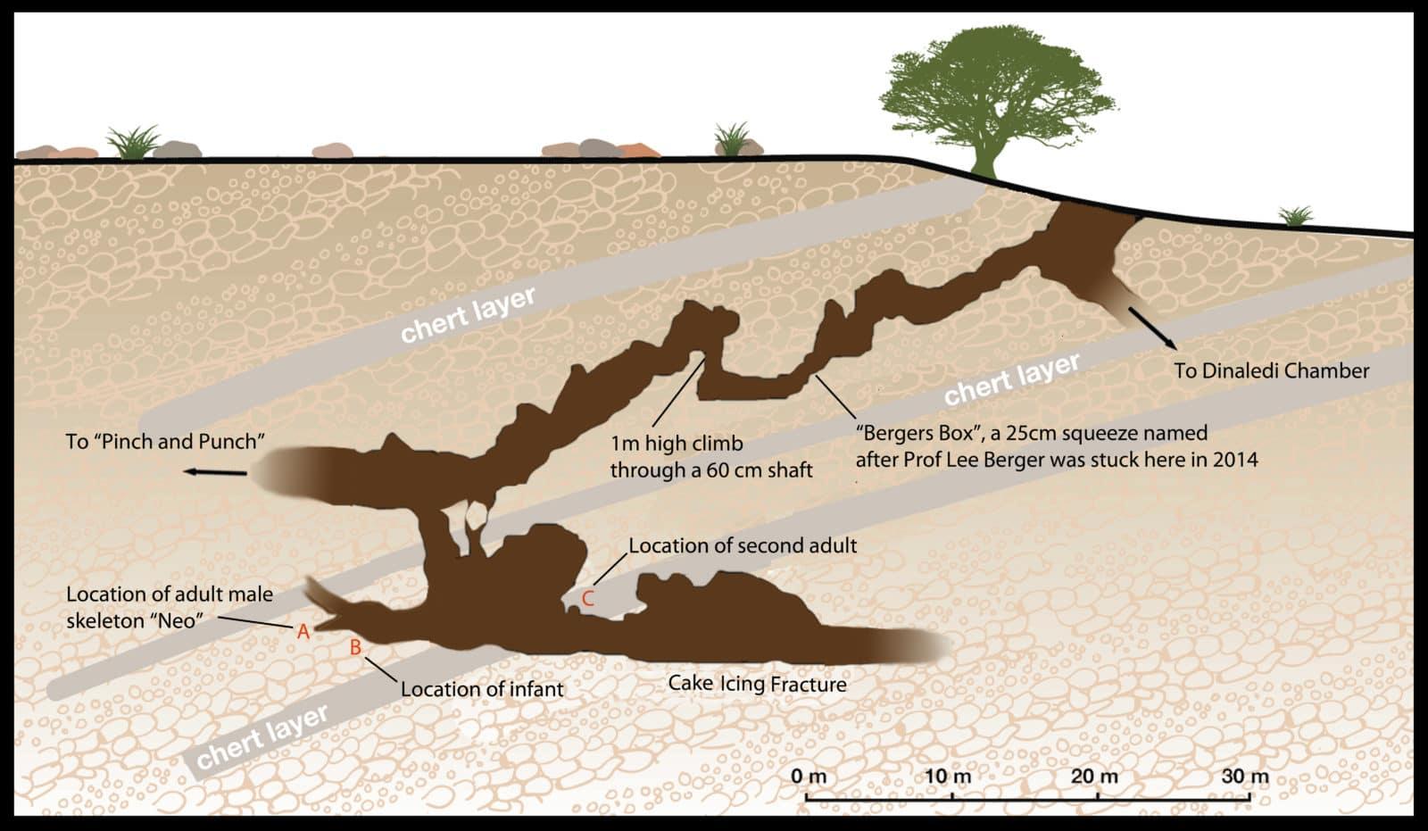 lesedi-cave-diagram - futurity  futurity.org