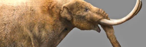 mastodon illustration