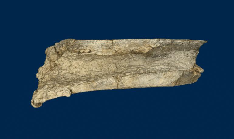 3D model of mastodon bone fragment