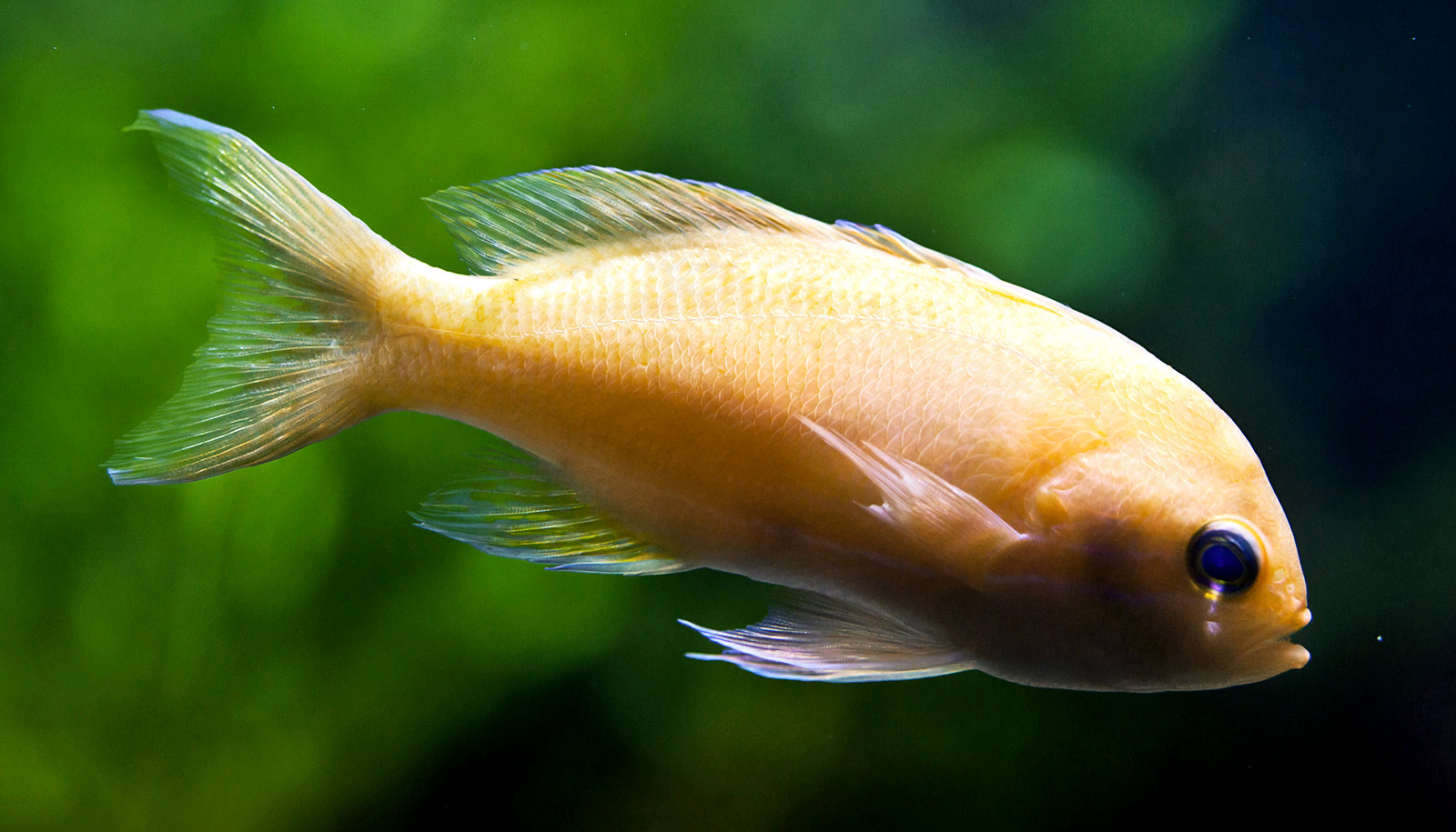 Why Fish Bend Their Fins Like Floppy Slices Of Pizza