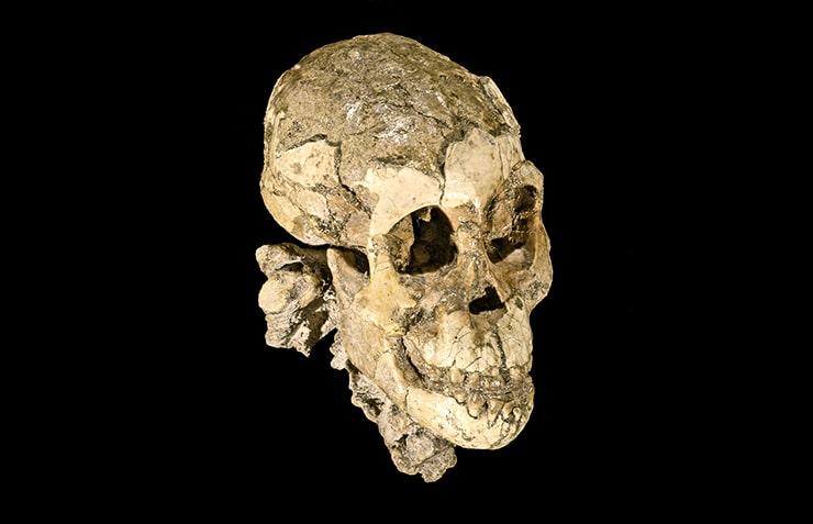 Selam's skull