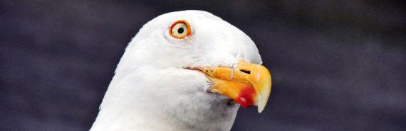 expressive gull face