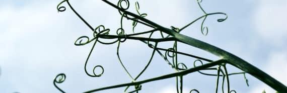 twisting tendrils against sky