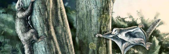 jurassic gliding mammals
