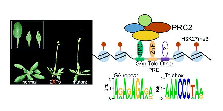 plant epigenetics illustration