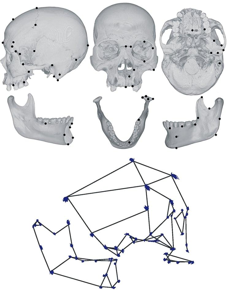 skull composite image