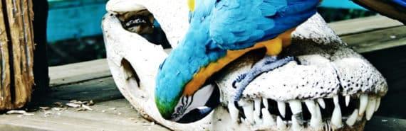 bird on reptile skull
