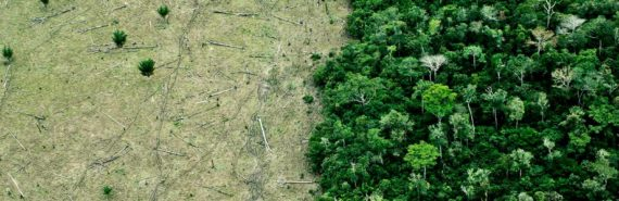 deforestation shot from the air