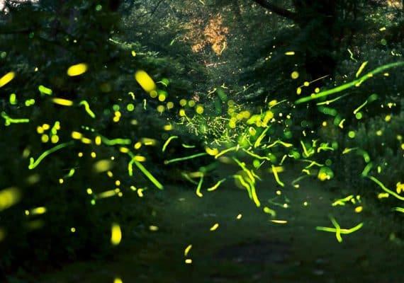 fireflies composite