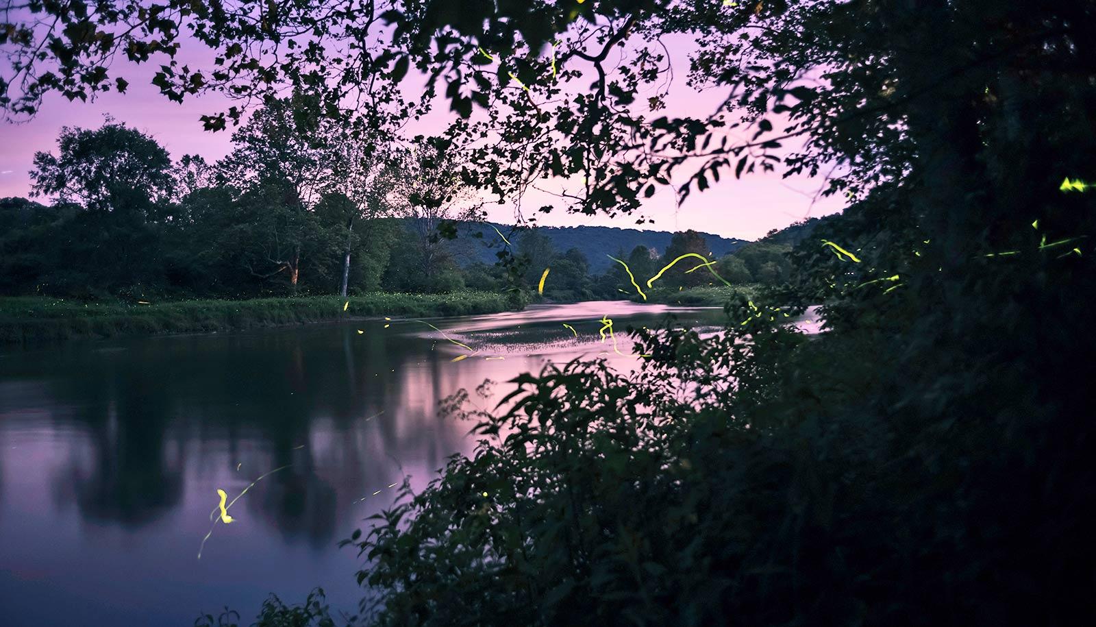 fireflies over water