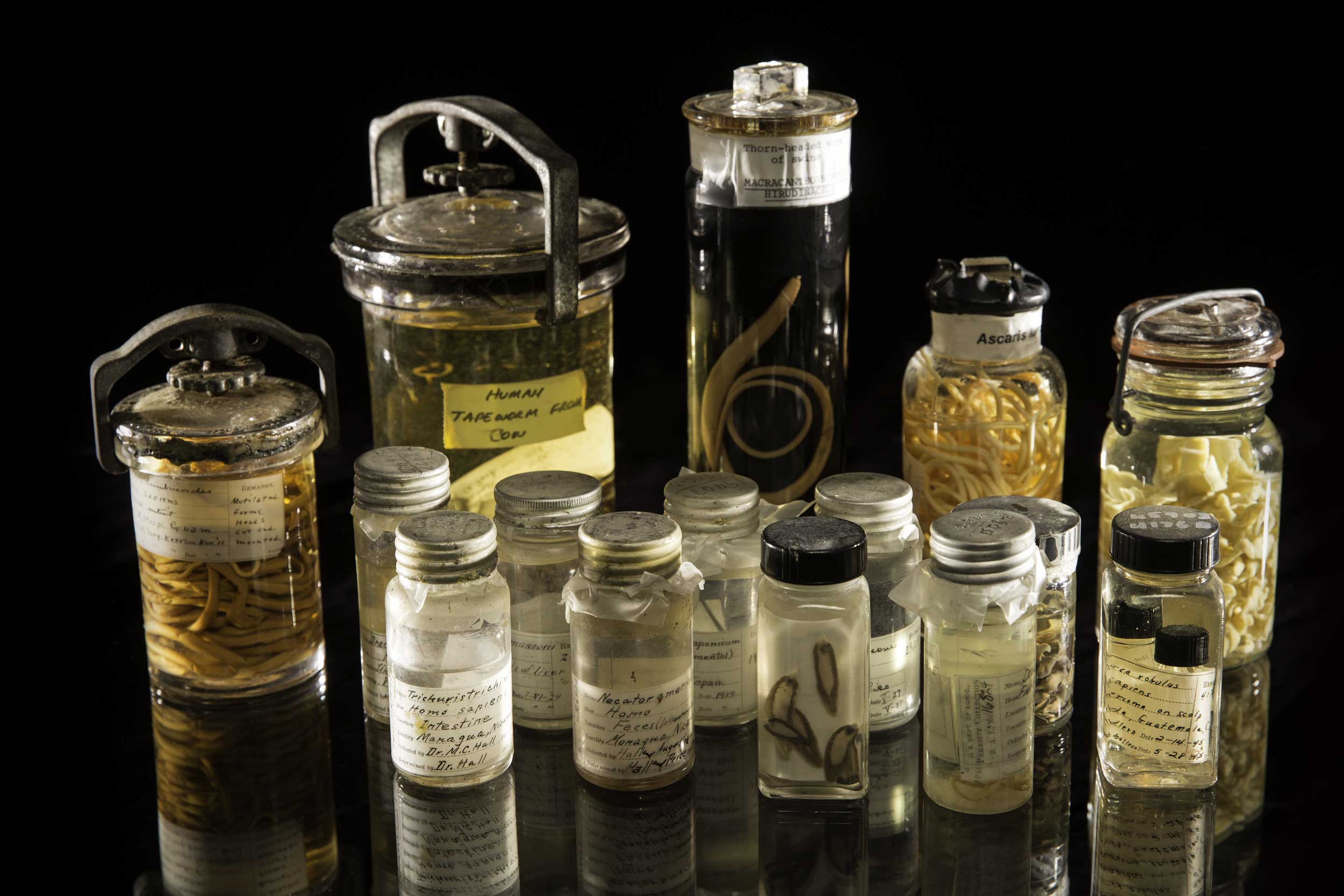 parasite specimens from Smithsonian