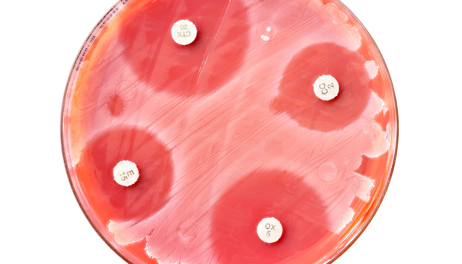 Antibiotics can goad 'superbugs' into ganging up on us