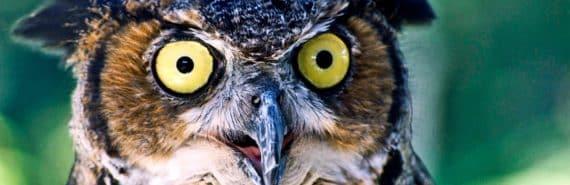 shocked-looking bird