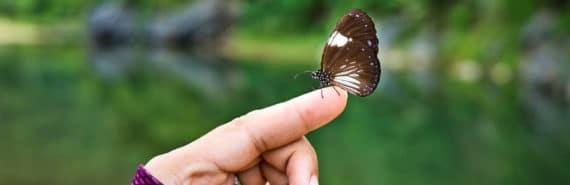 butterfly on woman's finger