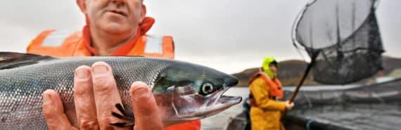 man holds fish at salmon farm