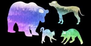 carnivore brain comparison (dogs vs. cats)