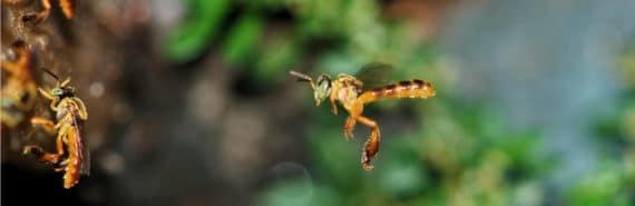 bee flies to nest