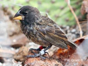 new finch species