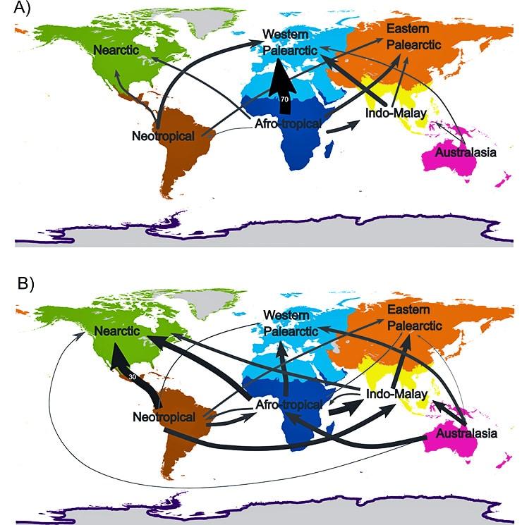bird trade comparison maps