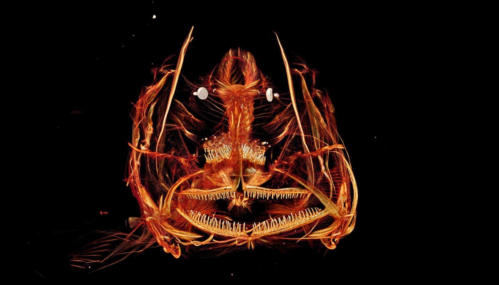 Mariana snailfish face